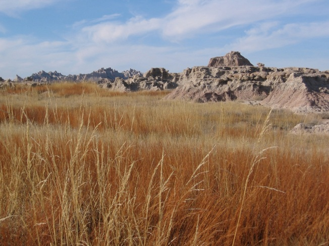 prairie grasses in winter along the Castle Trail in Badlands National Park