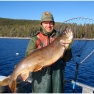 a very large lake trout caught in Yellowstone Lake