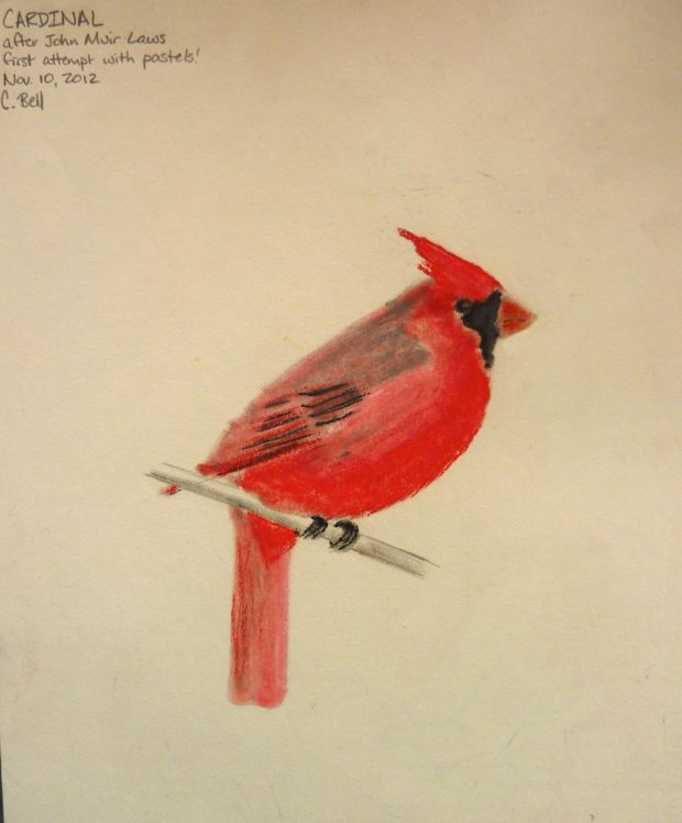 cardinal in pastels, after John Muir Laws