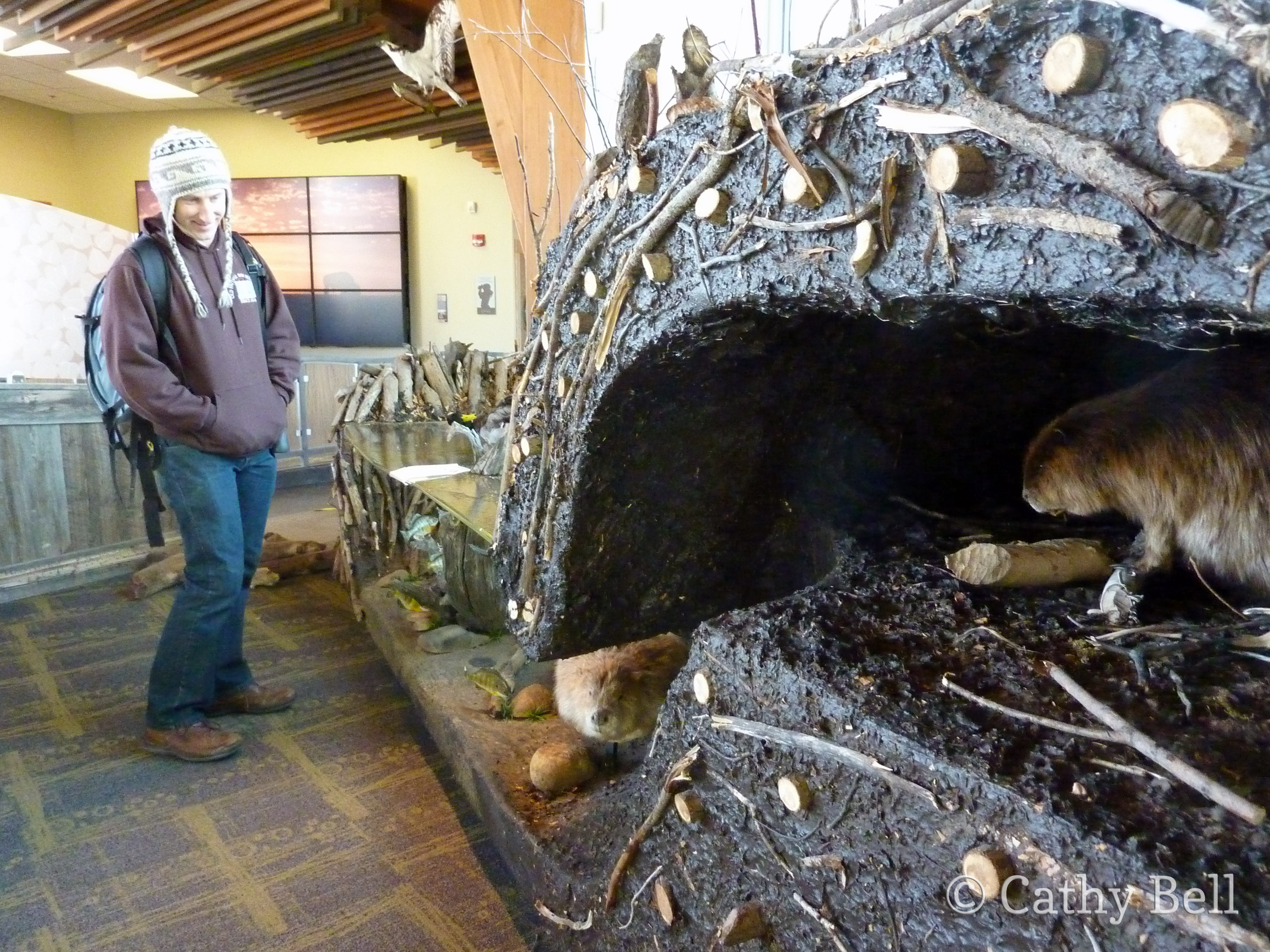 Inside a beaver lodge - photo#34