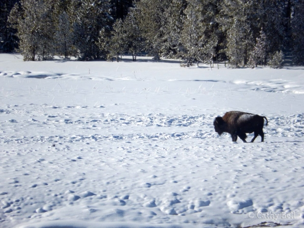 a bison walks through a snowy meadow