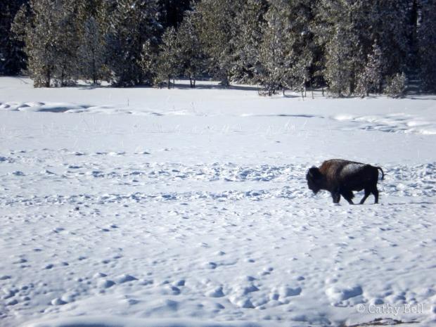 a bison walks through a snowy meadow