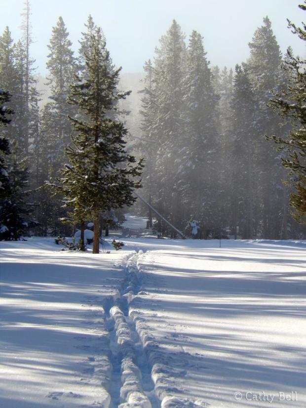 ski tracks through snowy woods